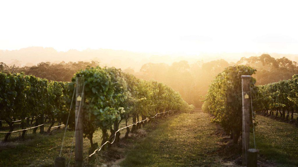 Jackalope Vineyard
