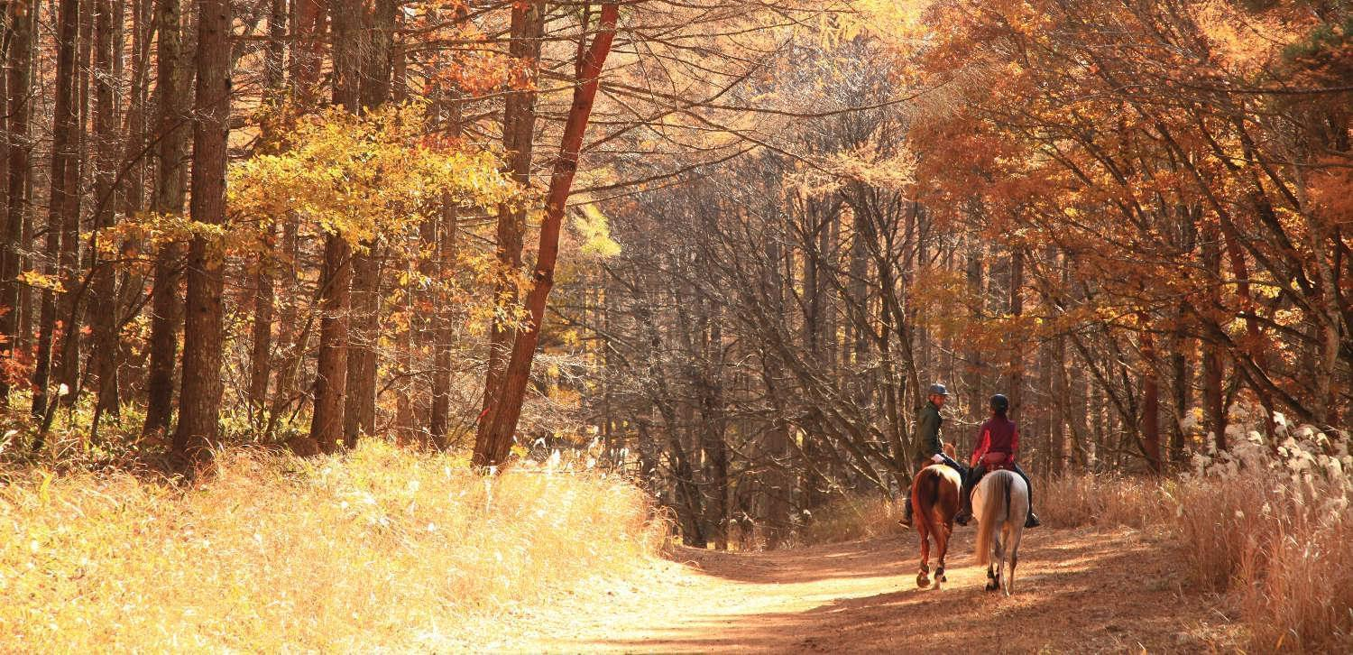Best horseback tours Japan