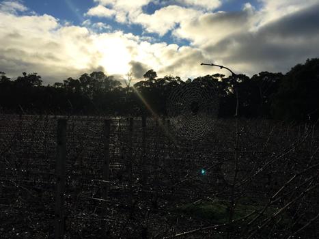Cloudburst Wine Margaret River Region