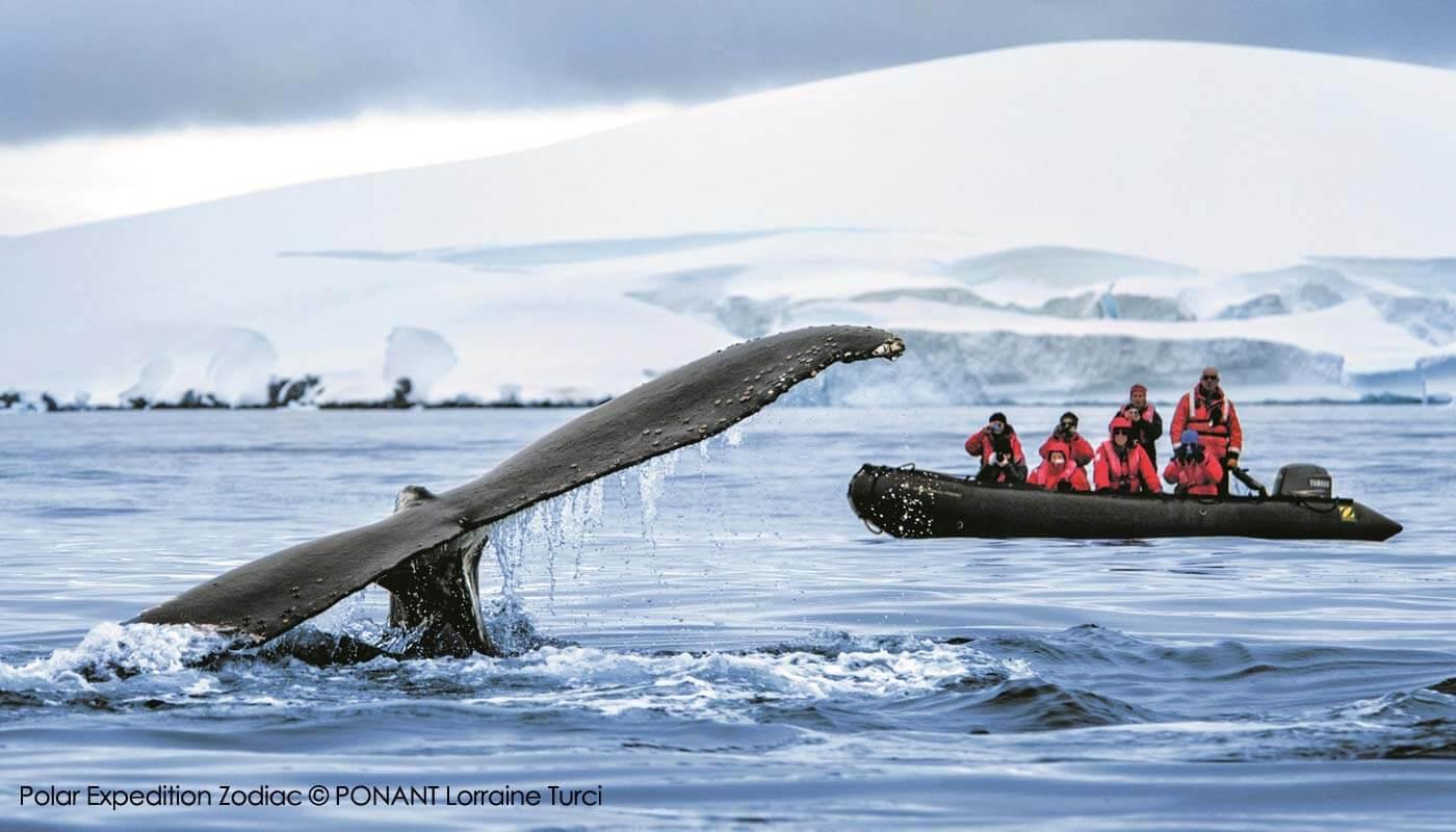 Polar Expedition Zodiac with PONANT
