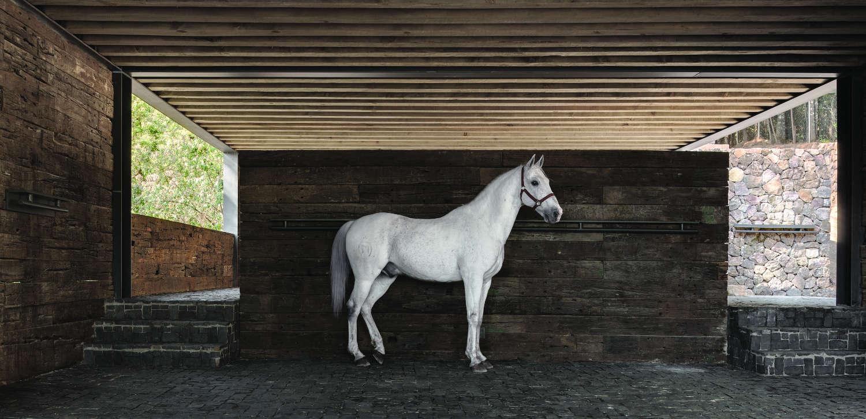 El Mirador House horses- Rafael Gamo