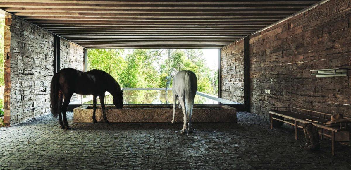 El Mirador House horses drinking