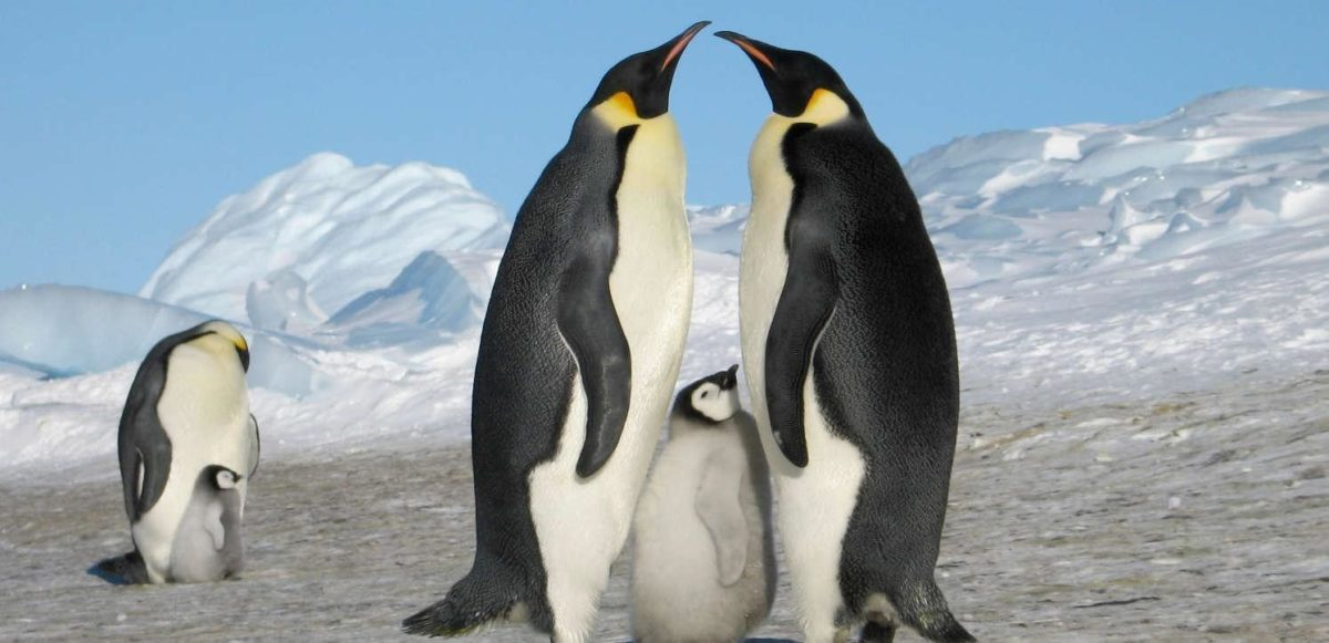 Remote luxury destination antarctica penguins