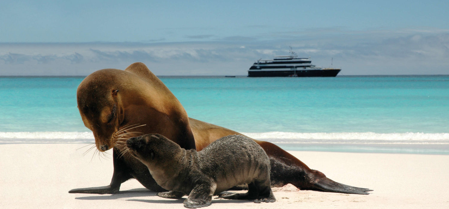 world's best cruise experiences Lindblad Expeditions, Galapagos Sea Lions