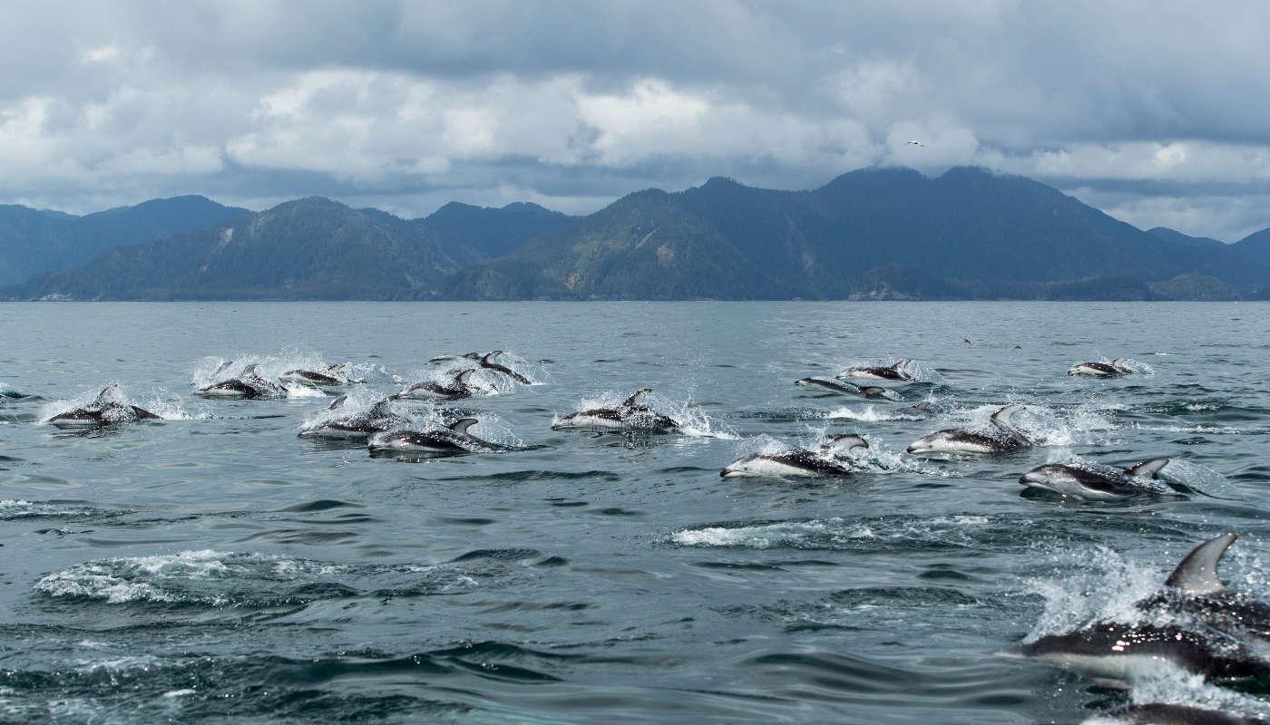 OceanHouse - Dolphins