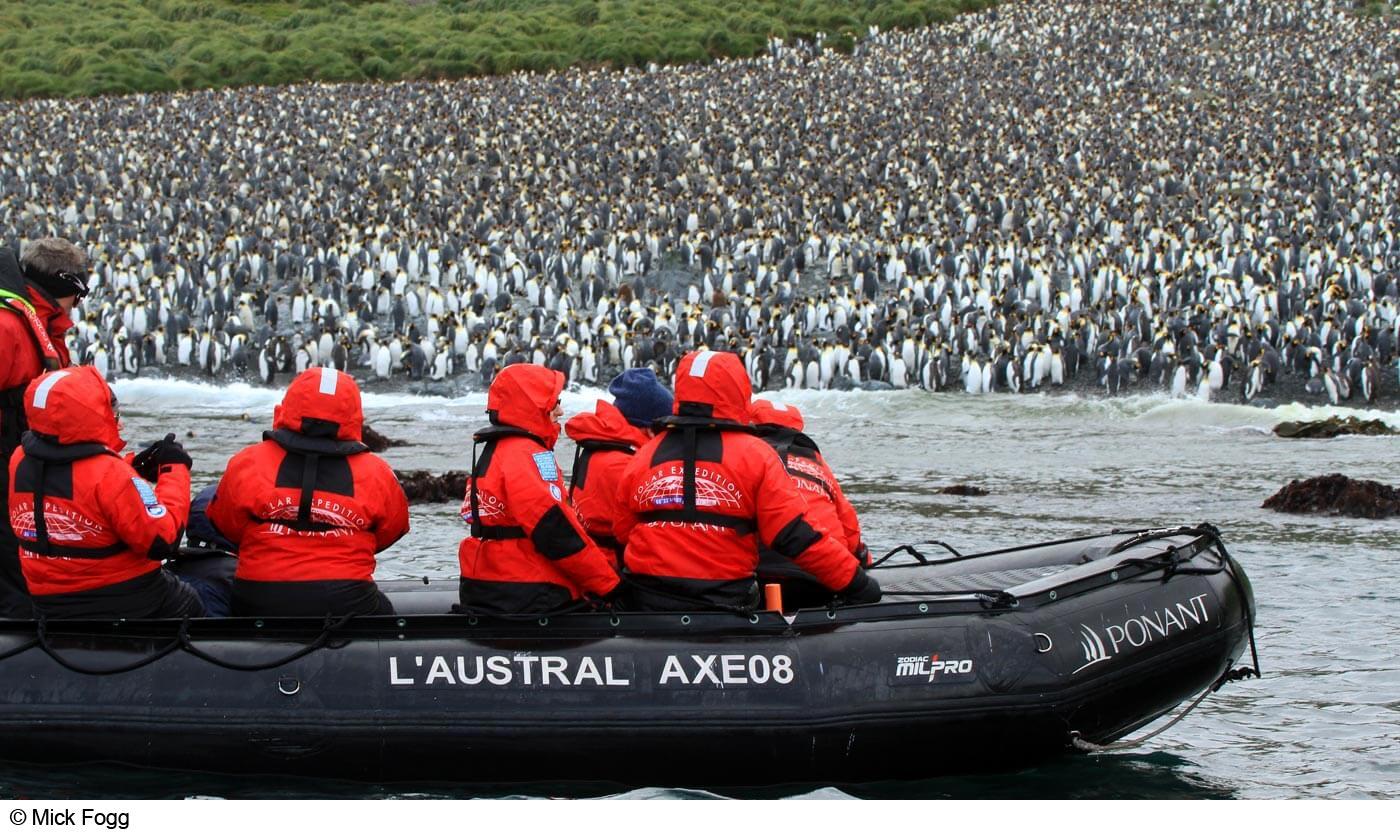 240,000 pairs of king penguins at Lusitania Bay