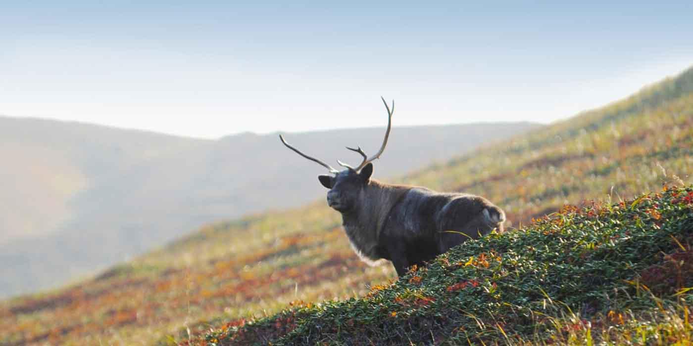 Alaska, Ponant, bucket list