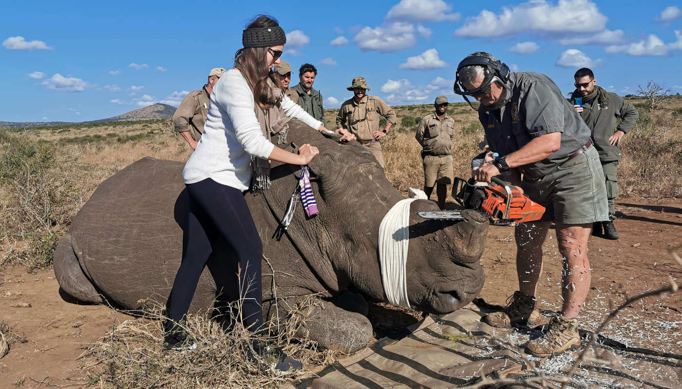 andbeyond phinda rhino conservation experience