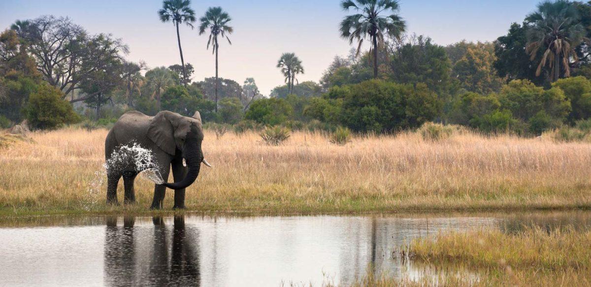 andBeyond Sandibe Okavango Safari Lodge