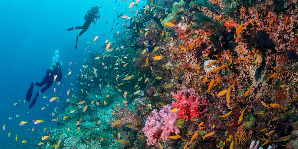 Diving at Azura Quilalea