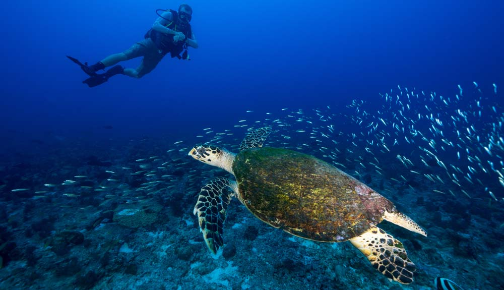 North Island, Private Island Resort, Seychelles