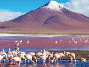 Laguna Colorada's crimson waters © Byelikova Oksana