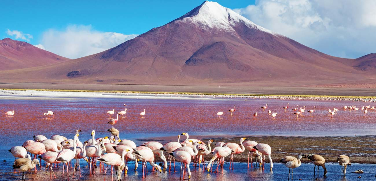 Laguna Colorada's crimson waters © Byelikova Oksana