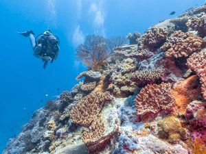 Diving the Rowley Shoals is extraordinary