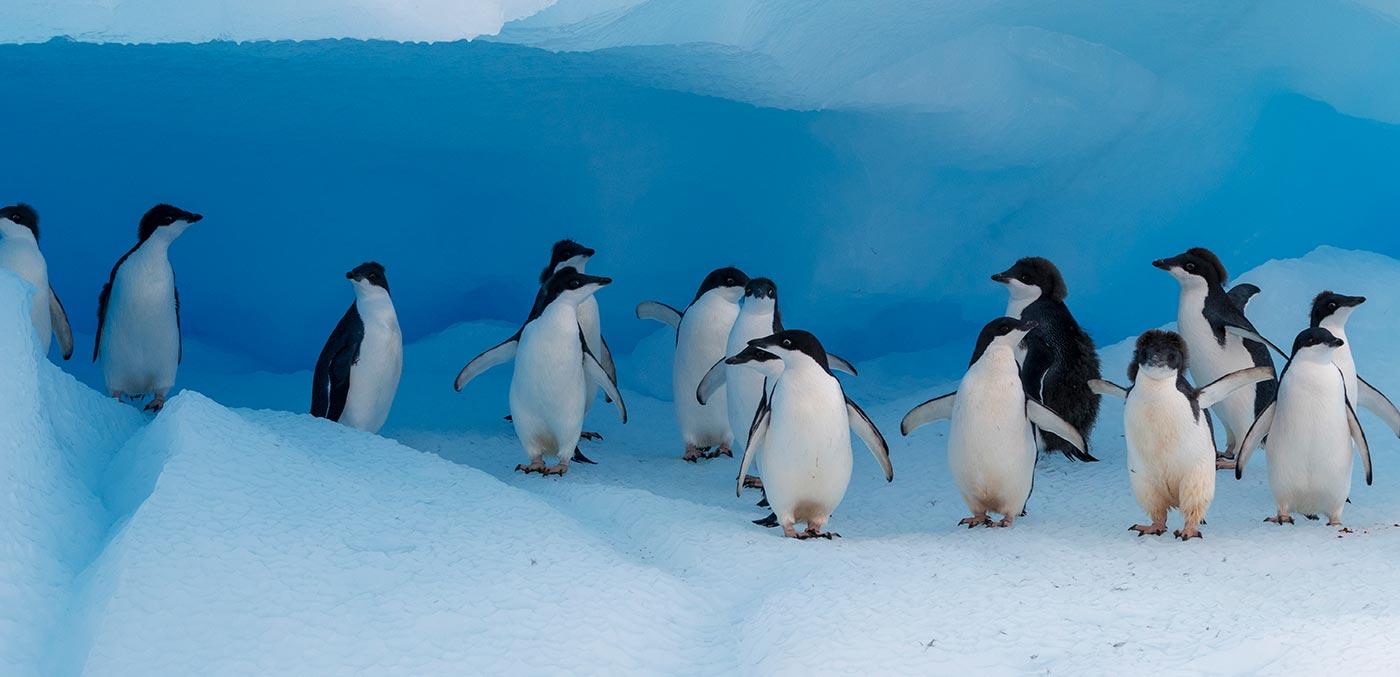 Antarctica, Brownbluff with Hurtigruten