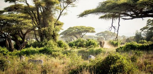 Safari with Abercrombie & Kent