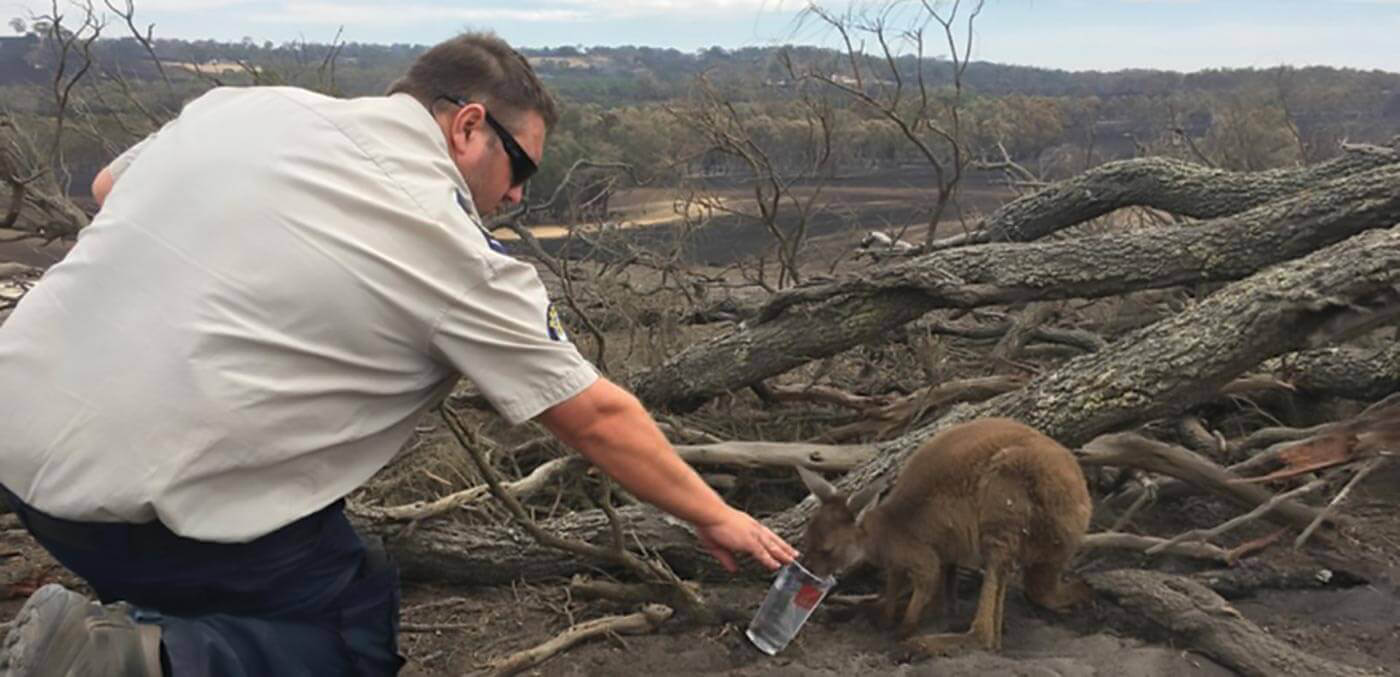 RSPCA SA inspectors at the Cudlee Creek fires