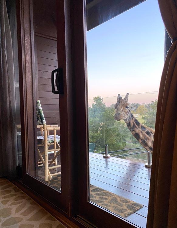 Giraffe Treehouses at Jamala