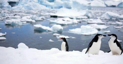 Penguins in Hurtigruten