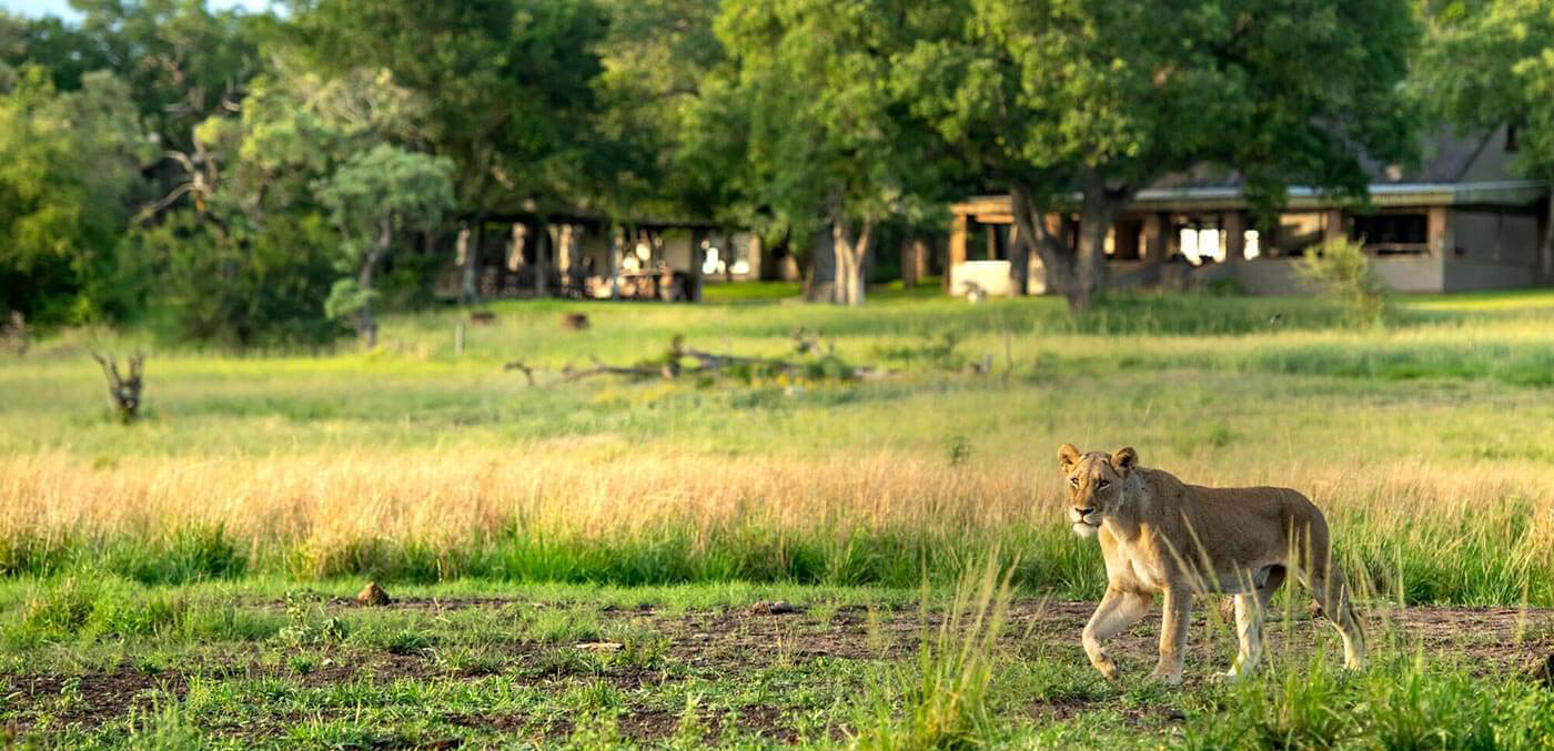 Safari at Singita Castleton