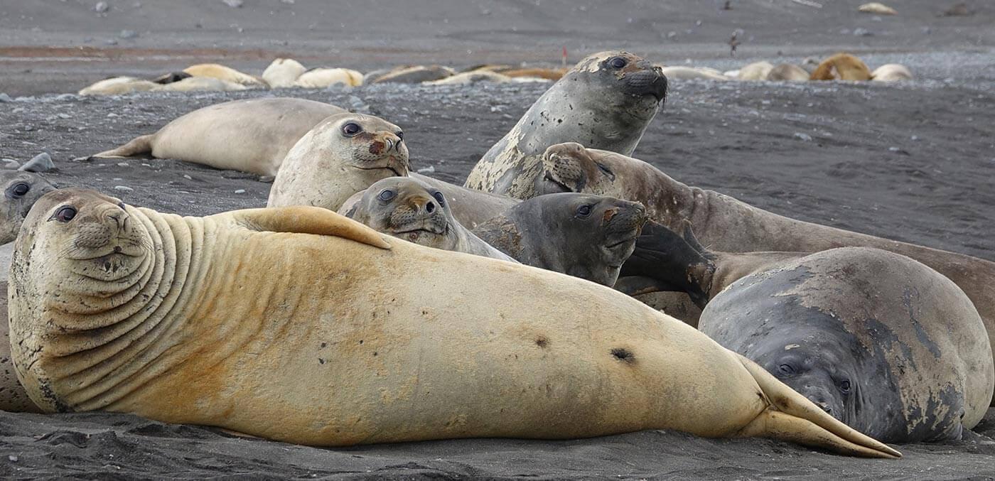 Seals in Antarctica