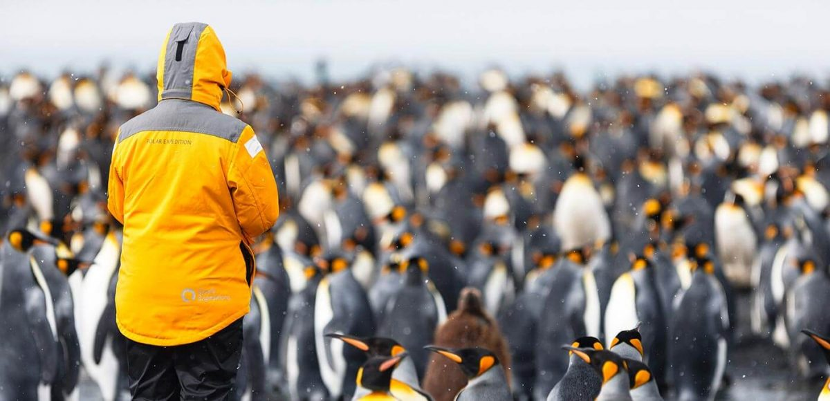 A waddle of penguins