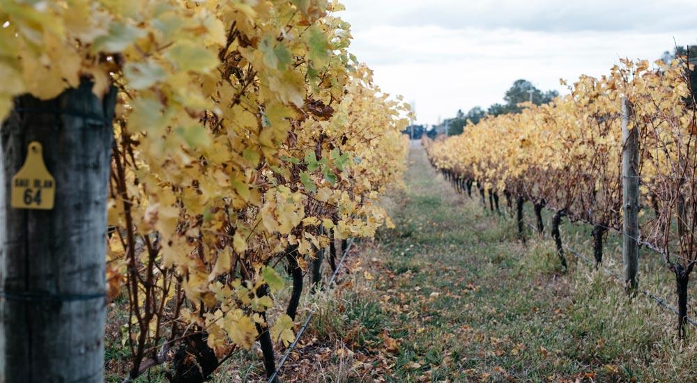 Ross Hill Wines, Orange