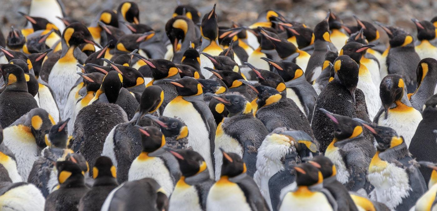 Meet the penguins of Antarctica - Signature Luxury Travel & Style