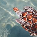 All P4O products protect and support our marine life, including reef-friendly sunscreen