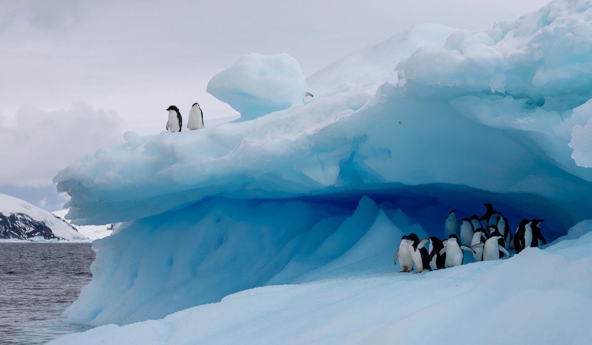 Hurtigruten Antarctica All-Inclusive with Flights