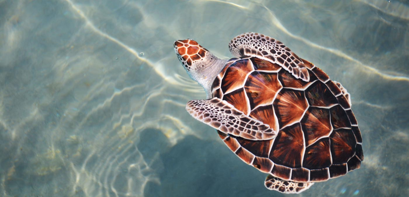 Eco friendly sunscreen protects turtles