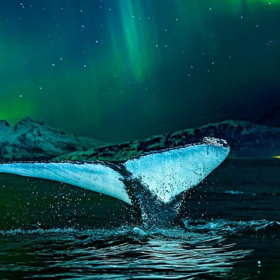 Whale spotting while seeing the Northern Lights in Norway
