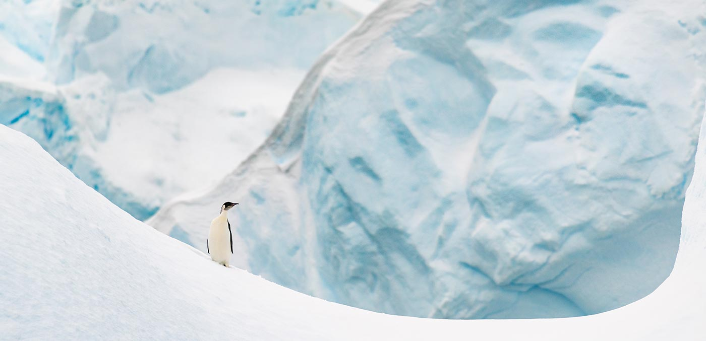 Penguins on Cuverville Island, Antarctica