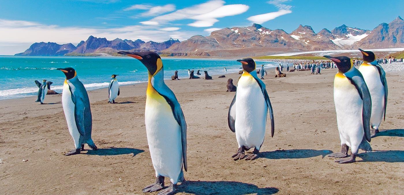 Penguins in Port Stanley, Falkland Islands