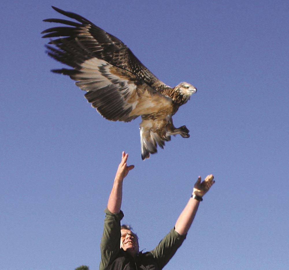 Image courtesy of the Raptor and Wildlife Refuge Centre