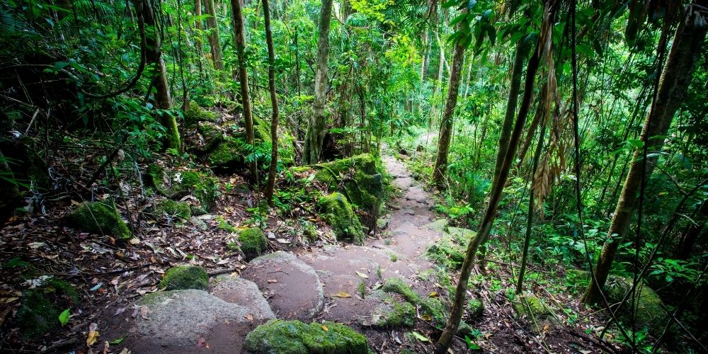 Mossman Gorge Tropical North Queensland