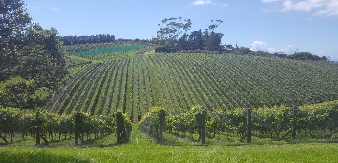 waiheke New Zealand wines