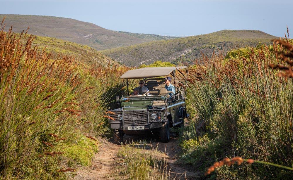 Flower safari at Grootbos Private Nature Reserve