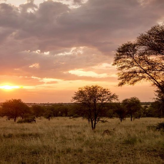 Safari at Four Seasons Safari Lodge Serengeti