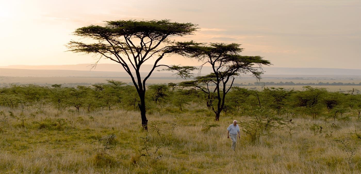 Sir David Attenborough pictured walking in the Maasai Mara, Kenya