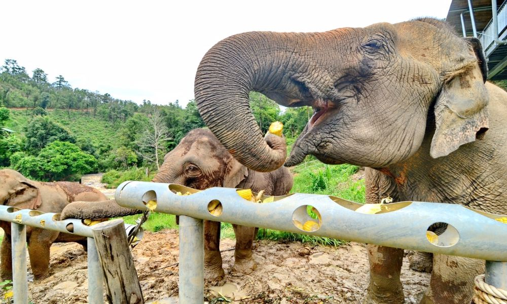 Feeding time with the elephants is a more ethical way of interacting with wildlife