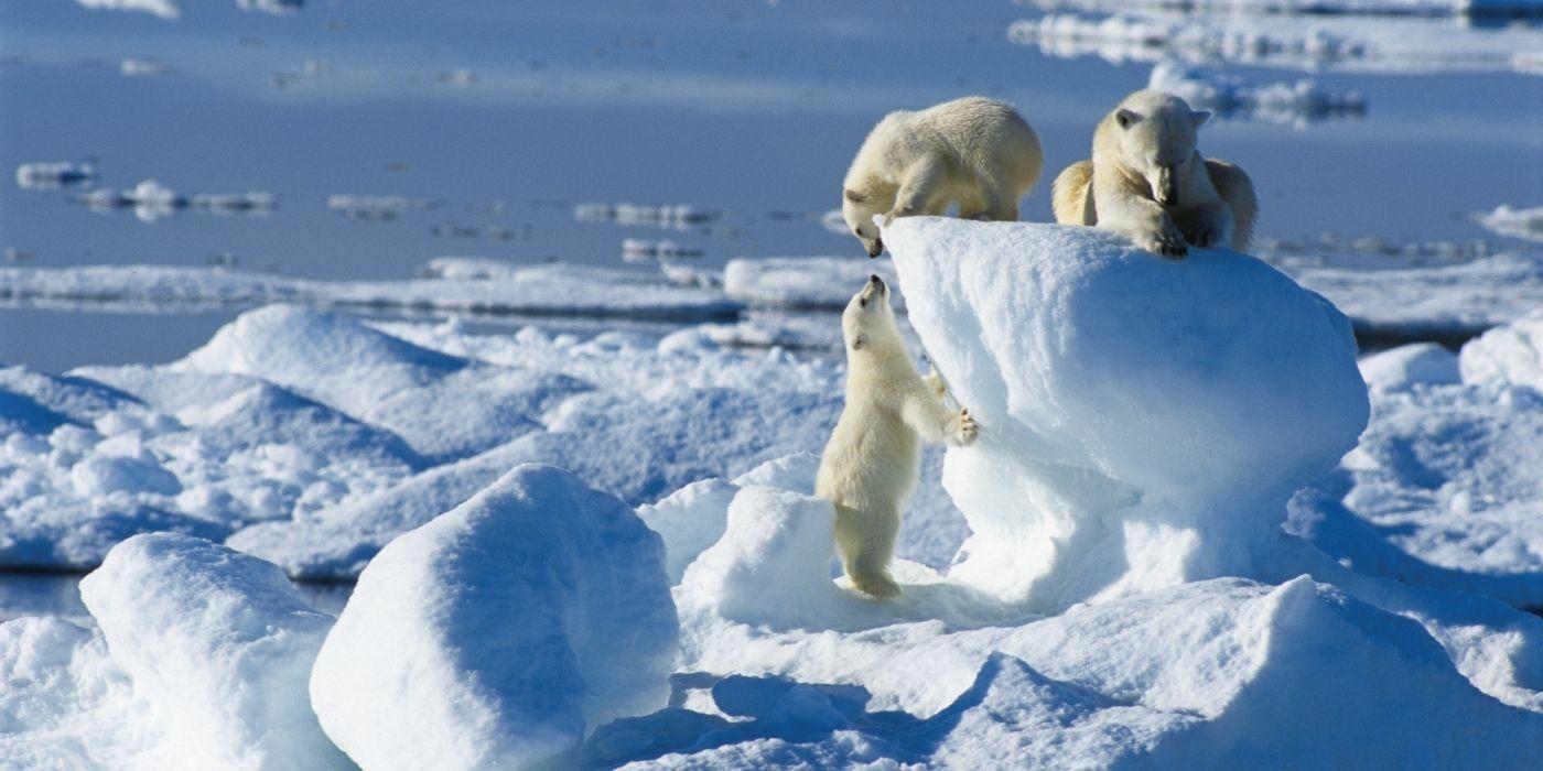Hurtigruten Arctic