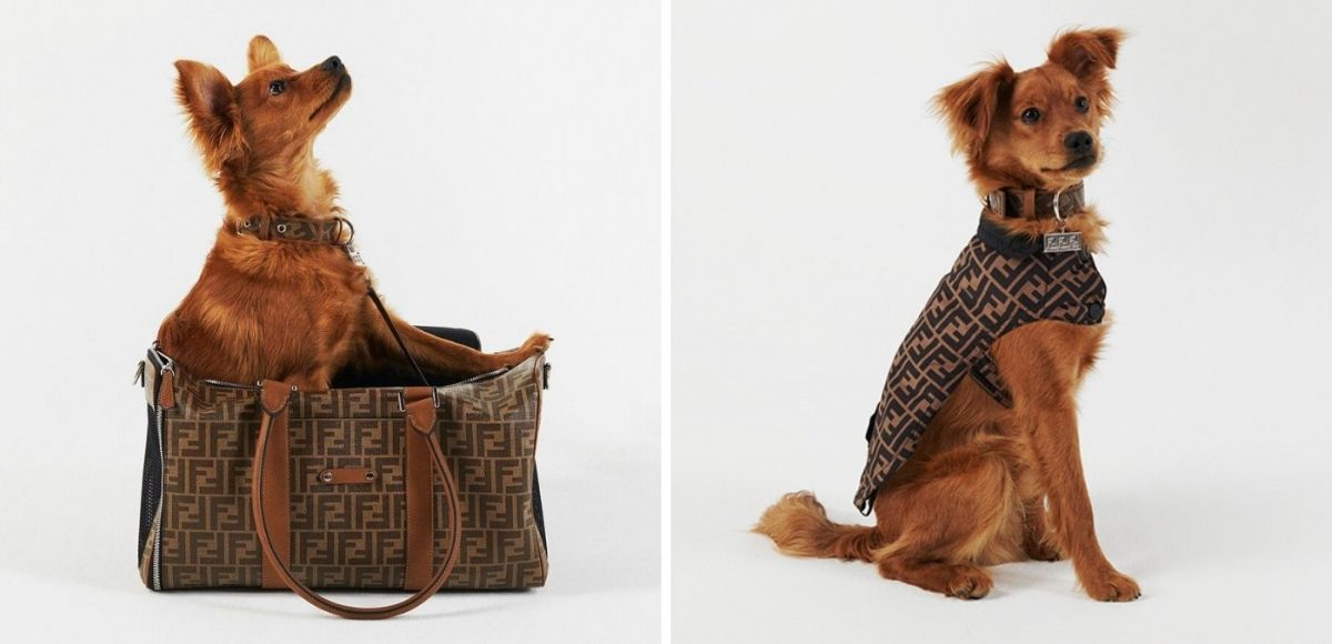 Fendi pet travel line
