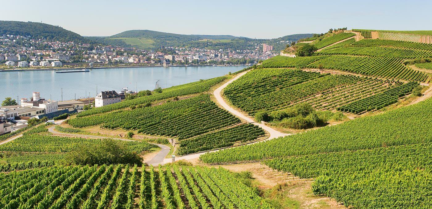 Rudesheim Vineyard
