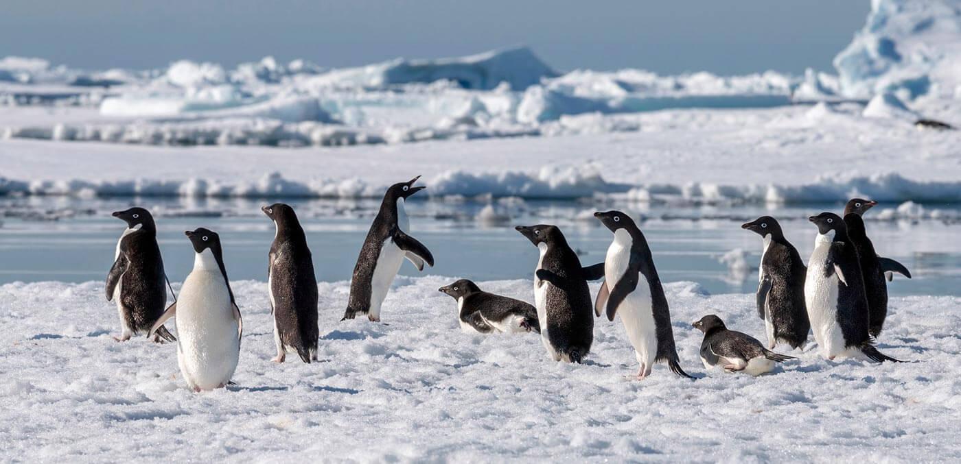 Antarctica cruise, Hurtigruten