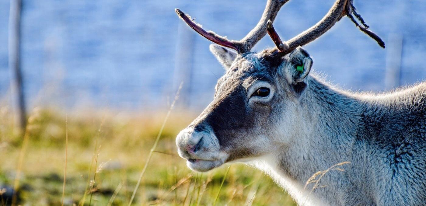 Sami culture, Hurtigruten Northern Lights cruise
