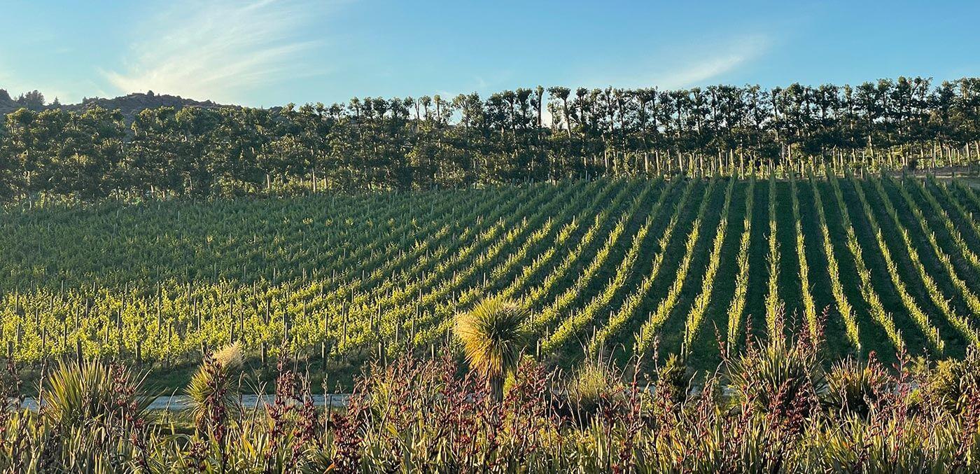 Sam's Two Paddock wines win global awards