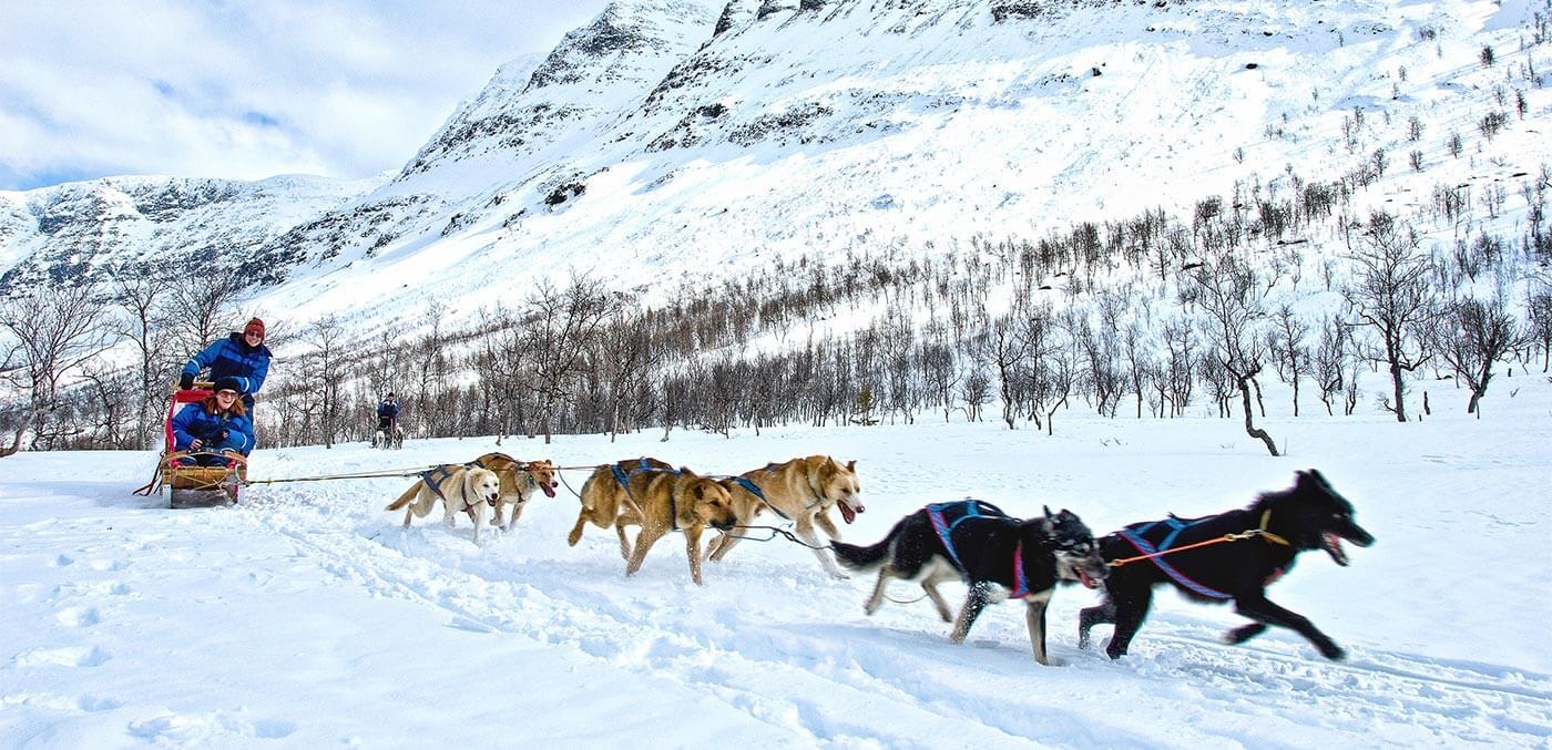 Dog sledding in Tromso, Norway